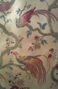Bird of Paradise Wallpaper