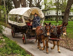 Covered wagon pulled by mules