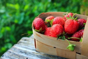 Strawberries in the basket at the Vaile Mansion Strawberry Festival